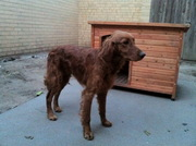 Monty needs rehoming asap