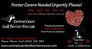 Central Coast Bull Terrier Rescue Need Foster/Forever Homes All States