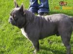 3 Stunning Kc Registered Pups For Sale