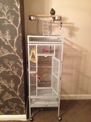 GREEN CHEEK CONURES WITH CAGE FOR SALE